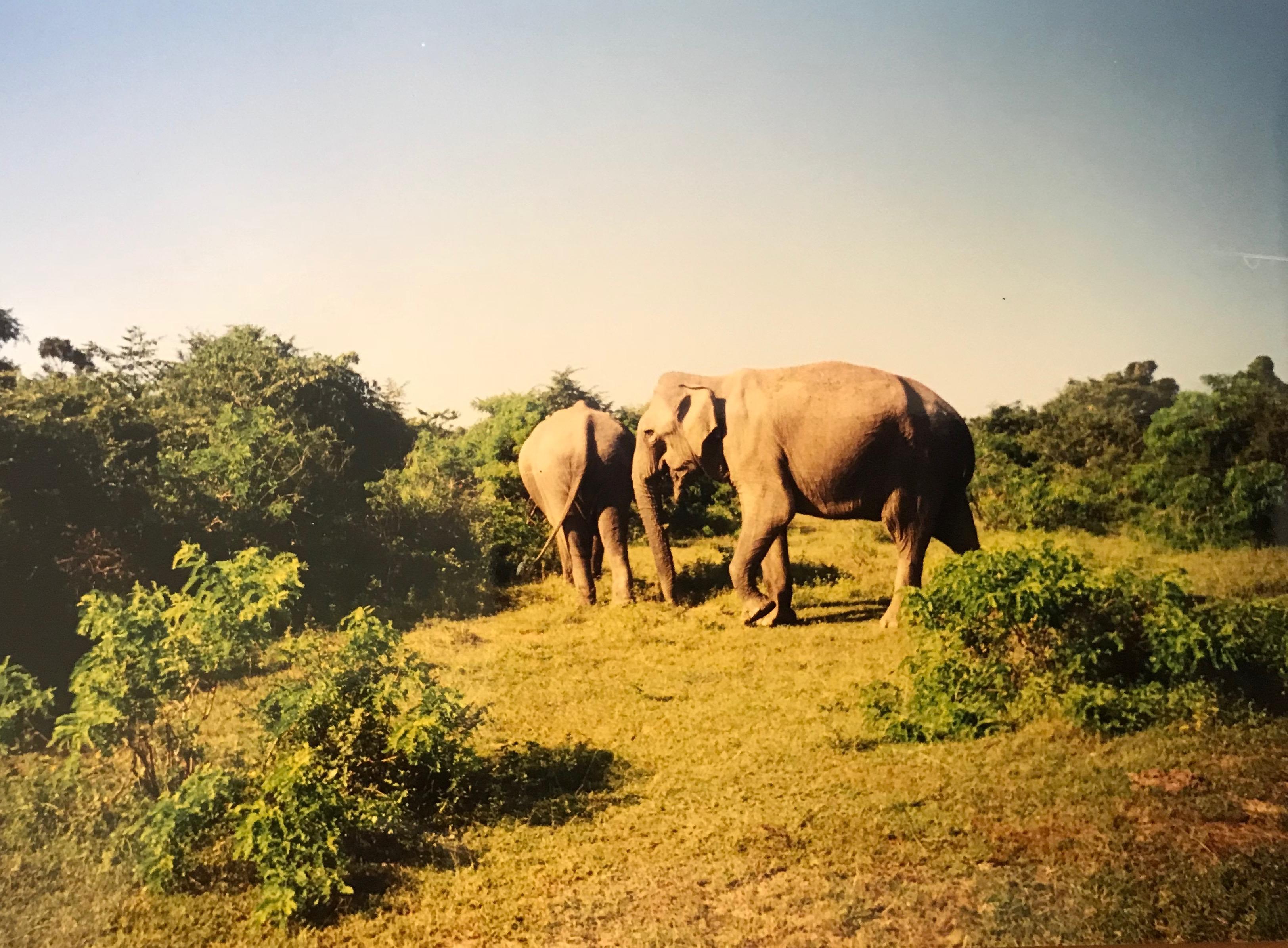 Yala Nationalpark Sri Lanka