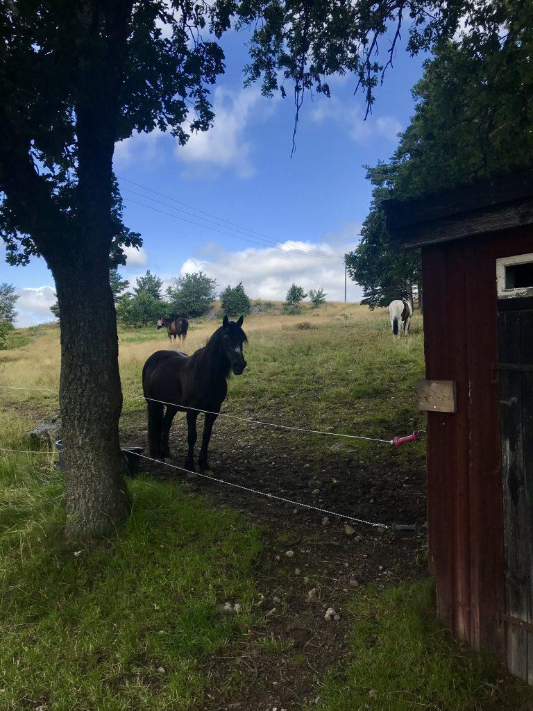 Björkö 4H-gård, Ljungsbro