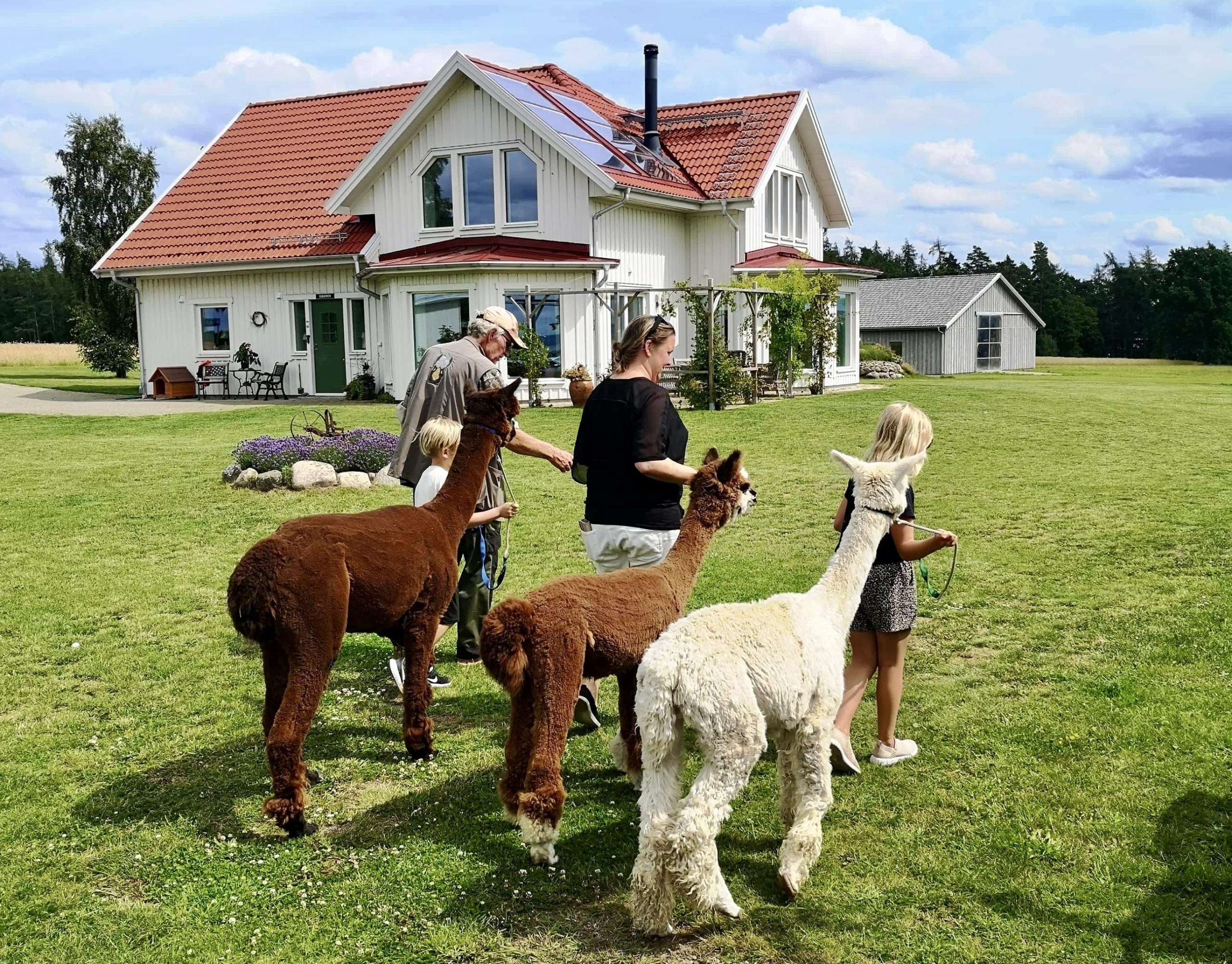 Visingsö alpacka