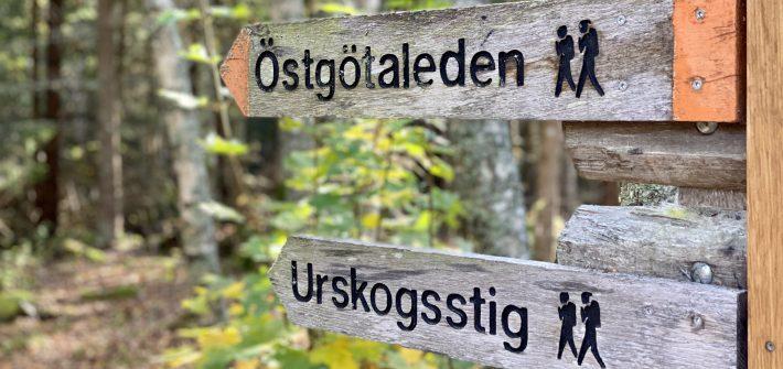 Säby Västerskog Urskogsstig