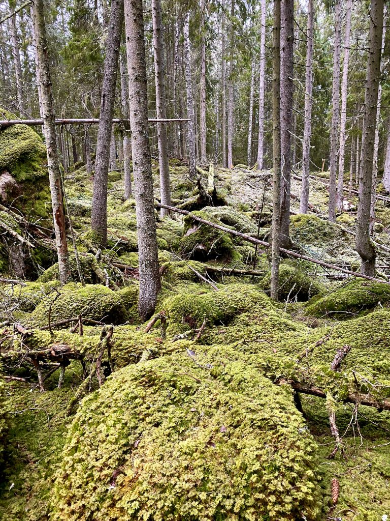 Ycke urskog